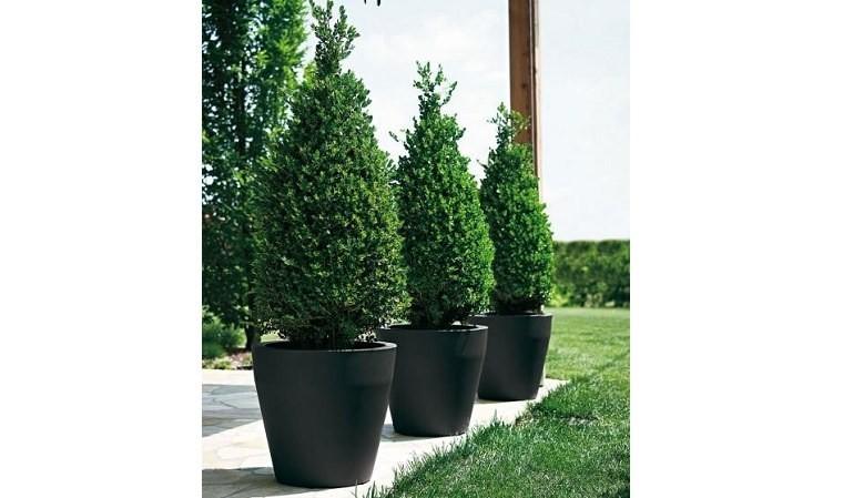Pot Pour Arbuste Exterieur